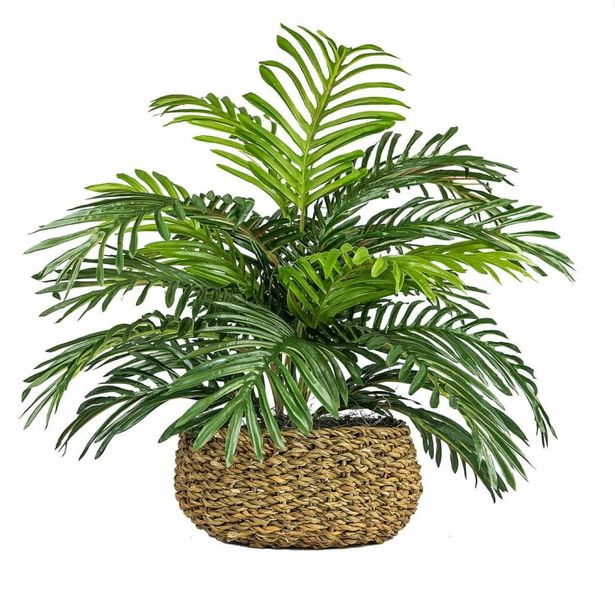 Palm in Low Basket Planter deals at $54.95